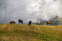 Лошади пася на холме стоковое изображение rf