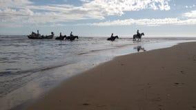 Лошади пересекая реку Стоковая Фотография