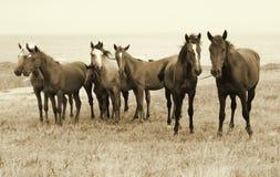 лошади пляжа одичалые Стоковое Фото