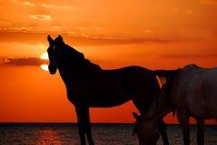 лошади пляжа Стоковое Изображение