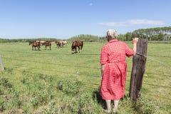 Лошади пожилой женщины наблюдая Стоковая Фотография
