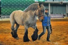 Лошади породы выставки стоковая фотография rf