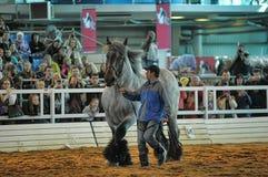 Лошади породы выставки стоковое фото