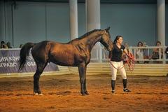 Лошади породы выставки Стоковая Фотография