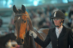 Лошади породы выставки Стоковые Фото