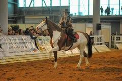 Лошади породы выставки Стоковое Изображение RF