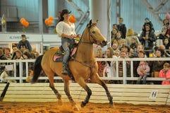 Лошади породы выставки стоковые изображения rf