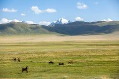 Лошади подавая в горах Стоковая Фотография RF