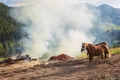 Лошади, подавая на траве на выгоне высоко-земли прикарпатском Стоковые Изображения
