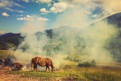 Лошади, подавая на траве на выгоне высоко-земли прикарпатском Стоковое Фото