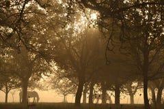 Лошади под деревьями Стоковая Фотография RF