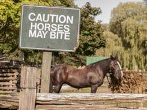 Лошади предосторежения могут сдержать Стоковые Фото