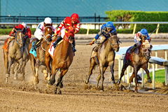 Лошади приходя вокруг последнего поворота Стоковые Изображения