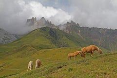 Лошади просматривать и Denti di Terrarossa Стоковые Фотографии RF