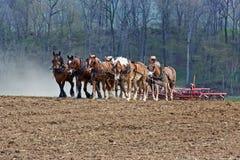 Лошади работая на ферме Амишей Стоковое Изображение RF