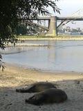 Лошади спать Стоковая Фотография RF