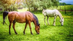 Лошади фермы на аграрном поле акции видеоматериалы