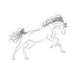 Лошади чертежа плана вектора Порхать галопов, гривы и кабеля лошади Стоковое Изображение RF