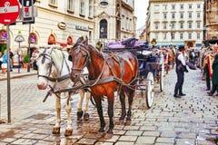 Лошади экипажа идя в улицы одного из самых красивых европейских городов - вена Австралии Стоковые Изображения RF