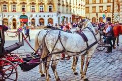 Лошади экипажа идя в улицы одного из самых красивых европейских городов - вена Австралии Стоковая Фотография RF