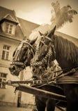Лошади экипажа свадьбы Стоковое фото RF