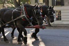 Лошади экипажа Стоковые Изображения