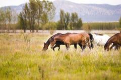 Лошади Стоковые Фотографии RF