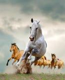 Лошади стоковое изображение