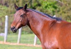 Лошади 139 Стоковое фото RF