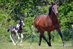 Лошади 143 Стоковые Фотографии RF