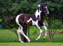 Лошади 300 стоковые изображения