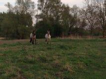 Лошади Стоковые Изображения RF