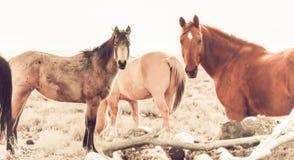 Лошади стоковое фото