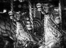 Лошади Carousel стоковая фотография