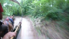Лошади Cart на высокой скорости Стоковое фото RF