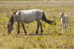Лошади, wildhorses Стоковые Фотографии RF