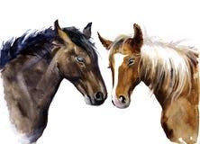 Лошадь акварели иллюстрация домашнего животного Стоковое Изображение