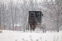 Лошадь Амишей и багги, снег, шторм Стоковые Изображения