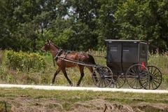 Лошадь Амишей и черное багги Стоковое Изображение RF