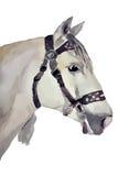 Лошадь, андалузская порода (голова) иллюстрация вектора