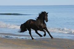 Лошадь бежит на пляже Стоковая Фотография