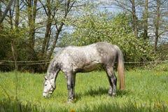 Лошадь бежит свободно на луге, красивом mildew яблока Стоковое Изображение