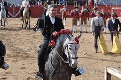 Лошадь бой Bull стоковые фото