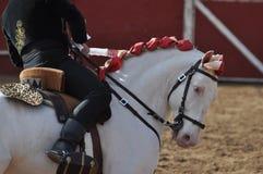 Лошадь бой Bull стоковое фото rf