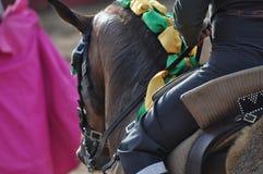Лошадь бой Bull Стоковая Фотография RF