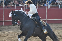 Лошадь бой Bull Стоковые Изображения