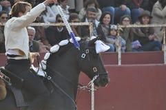 Лошадь бой Bull стоковая фотография