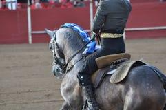 Лошадь бой Bull стоковое изображение rf