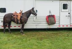 Лошадь бочонка родео Стоковая Фотография
