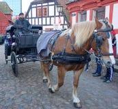 Лошадь Брайна в городке Орхуса старом стоковое фото